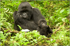 Galleritryck  Gorilla with baby in the green - Joe & Mary Ann McDonald