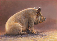 Galleritryck  Pig in the wallow