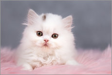 Galleritryck  British longhair cat baby in white - Janina Bürger