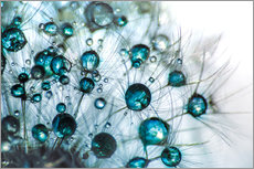 Galleritryck  Dandelion Drop gloss in blue turquoise - Julia Delgado