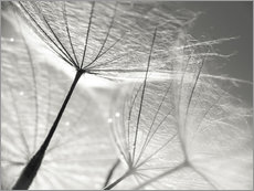 Galleritryck  Dandelion Umbrella in black and white - Julia Delgado