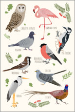 Premiumposter  Bird species - French - Kidz Collection