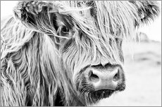 Självhäftande poster  Highland cattle - Art Couture
