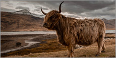 Galleritryck  Highland cattle - Art Couture