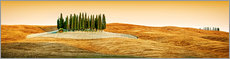 Premiumposter Cypress trees in Tuscany