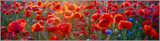 Akrylglastavla  Poppy field - Art Couture
