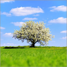 Premiumposter Blossoming tree in spring