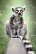 Premiumposter  Lemur - Bettina Dittmann