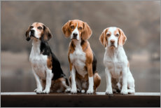 Premiumposter Beagles Trio