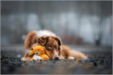 Premiumposter Australian Shepherd with Teddy
