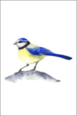 Premiumposter Blue tit
