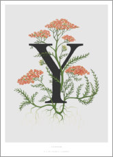 Premiumposter Y is for Yarrow