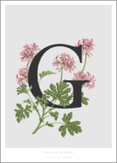 Premiumposter G is for Geranium
