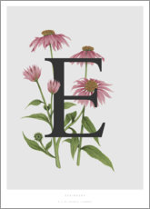 Premiumposter E is for Echinacea