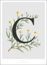 Premiumposter C is for Chamomile