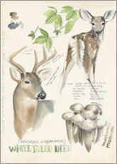 Poster  Whitetailed deer & forest mushrooms - Jennifer Parker