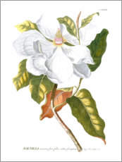 Canvastavla  Magnificent Magnolias I - Jacob Trew