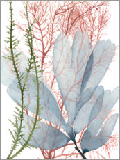 Premiumposter  Sea plants I - Grace Popp