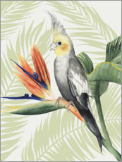 Canvastavla  Cockatiel II - Grace Popp