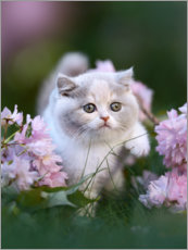 Premiumposter  Kitten on a flower meadow - Janina Bürger