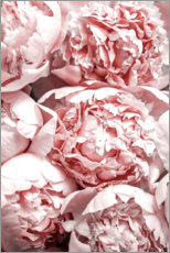 Canvastavla  Salmon-colored peonies - Art Couture