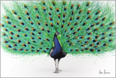 Canvastavla  Proud Peacock - Ashvin Harrison