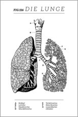 Canvastavla  Lungs Vintage Diagram (German) - Wunderkammer Collection