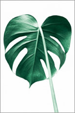Premiumposter  Lonely Monstera - Sisi And Seb