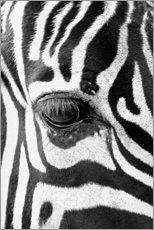 Akrylglastavla  Eye of the zebra - Art Couture