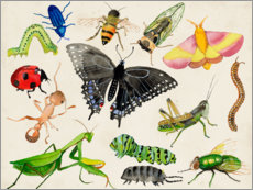 Premiumposter The world of insects