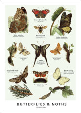 Poster  Butterflies (English) - Wunderkammer Collection