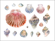 Premiumposter Seashells Collection Watercolor