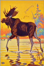 Canvastavla  Moose in the moor - Travel Collection