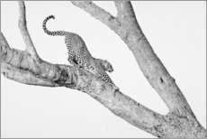 Canvastavla  Stretching in the tree - Jaynes Gallery