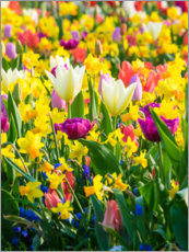 Premiumposter  Multi-colored flowers in spring - Terry Eggers