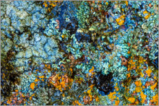 Poster  Stone with lichen II - Stuart Westmorland