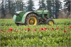 Canvastavla  Tractor on a tulip field