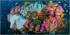 Akrylglastavla  Corals surrounded by sea gold