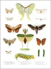 Premiumposter  Color splendor of insects II - Wunderkammer Collection