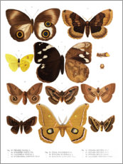 Premiumposter  Colourfulness of insects V - Wunderkammer Collection