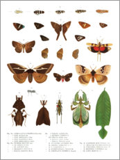 Premiumposter  Colourfulness of insects VII - Wunderkammer Collection