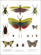 Premiumposter  Color splendor of insects I - Wunderkammer Collection