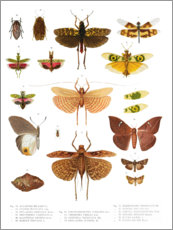 Premiumposter  Colourfulness of insects VI - Wunderkammer Collection