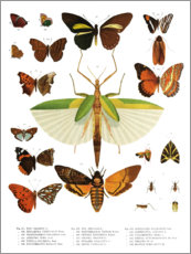 Premiumposter  Color splendor of insects IIX - Wunderkammer Collection