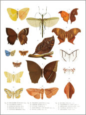 Premiumposter  Colourfulness of insects III - Wunderkammer Collection