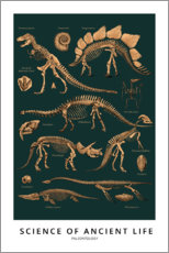 Premiumposter  Paleontology - Wunderkammer Collection