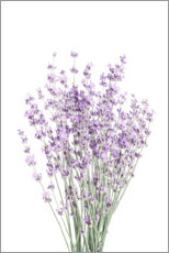 Premiumposter  Fragrant lavender - Sisi And Seb