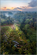 Premiumposter  Rice fields and volcano, Bali - Matteo Colombo