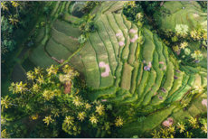 Premiumposter  Rice field from above, Bali - Matteo Colombo
