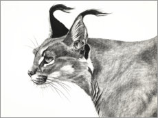 Premiumposter Caracal in the wind